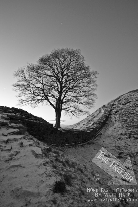 sycamore gap in snow