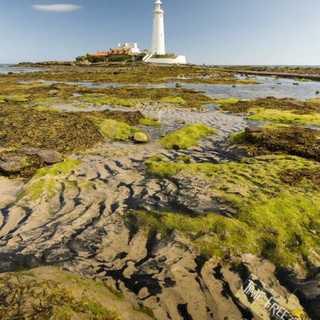 St Marys Lighthouse Summer Photograph