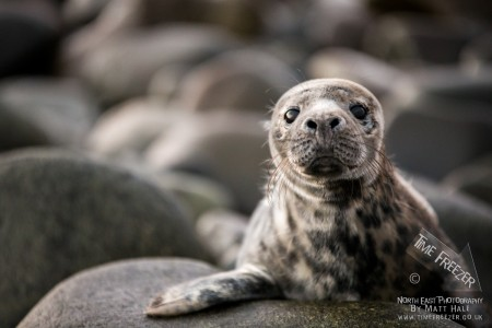 Seal Pup Photo