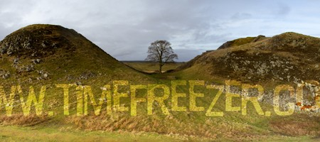 Sycamore Gap Panoramic Photo