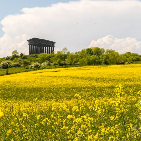 Summertime at Penshaw Monument