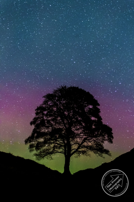 Aurora Borealis at SYcamore Gap
